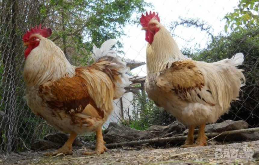 Забраниха птичите пазари в Кърджали