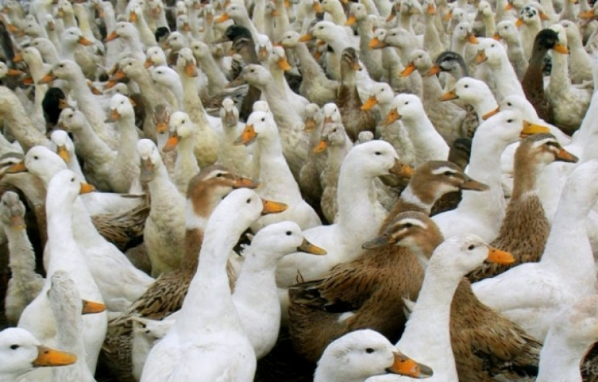 Първо огнище на птичи грип за 2020 г.