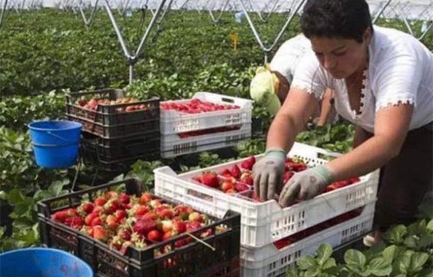 Безработните няма да губят право на помощи, ако работят сезонно