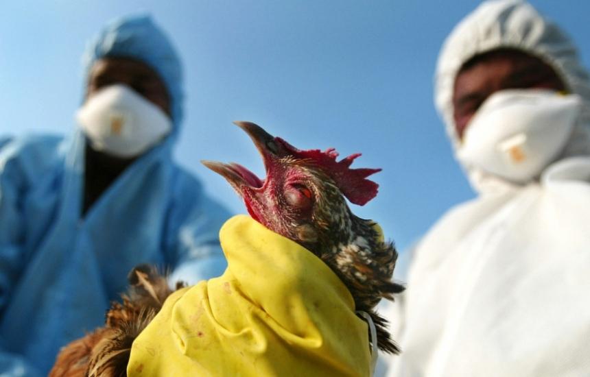 Дават 9,7 млн. за битката с птичия грип