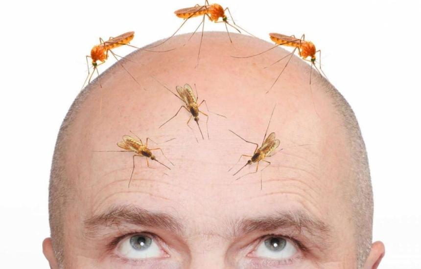 Зика и малария на мушка в Деня на комара