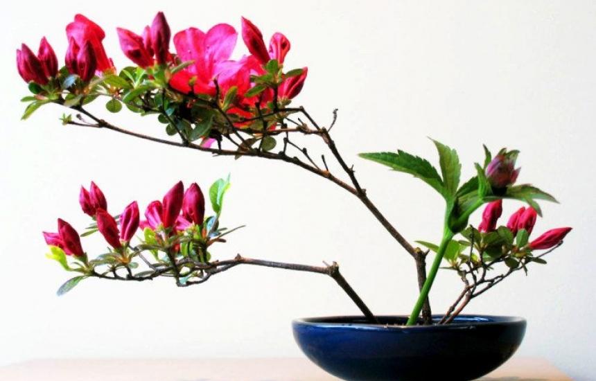 УСБАЛО посреща първа пролет с икебана