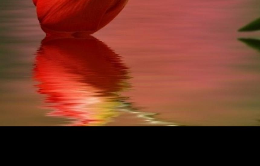 11 април - Ден за борба с шизофренията