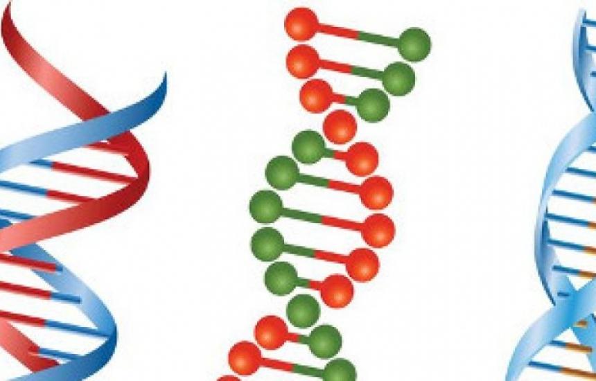Няма ген на хомосексуалността