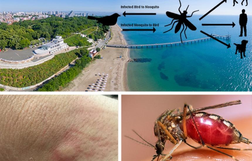 13 починали от западнонилска треска в Гърция