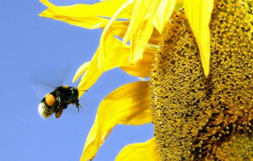 Отварят конкурс за биоразнообразието и климата