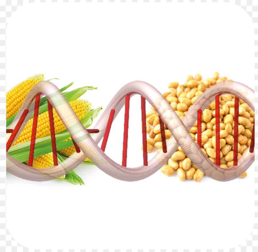 Обучават експертите за контрол на ГМО