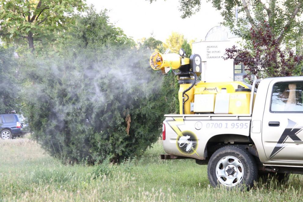 Нашествие на комари в Кърджали