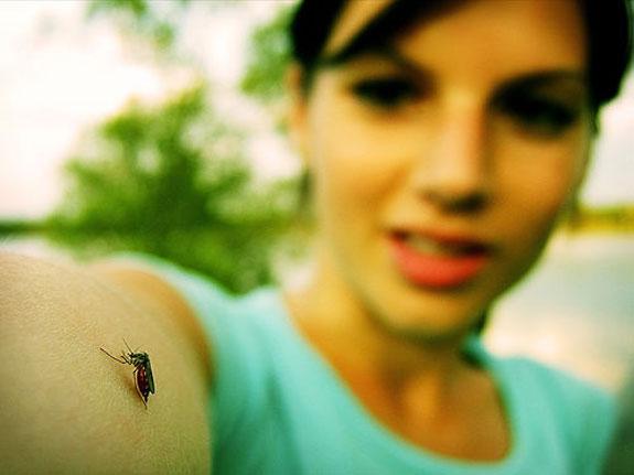 Лавандула държи комарите далеч