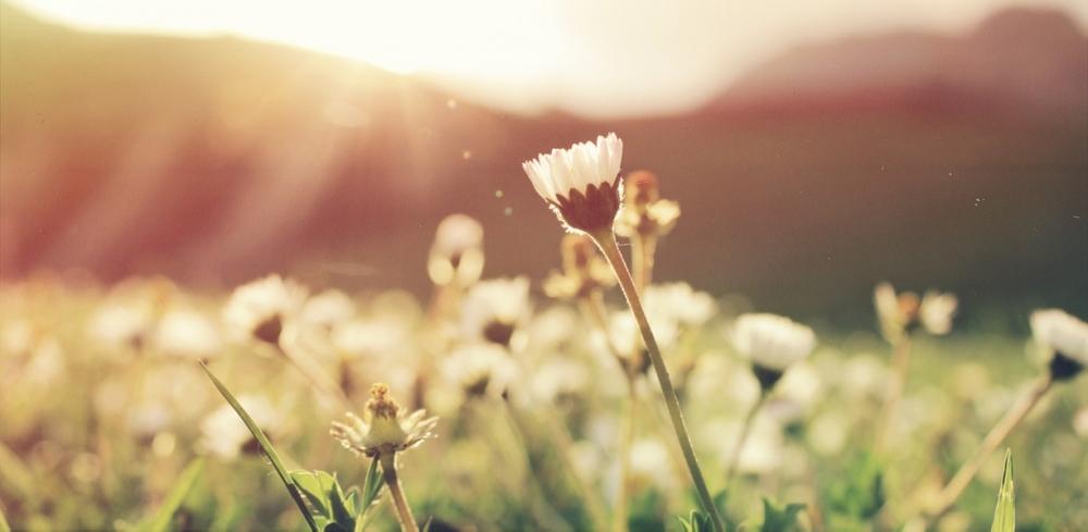Пролетта обостря алергиите