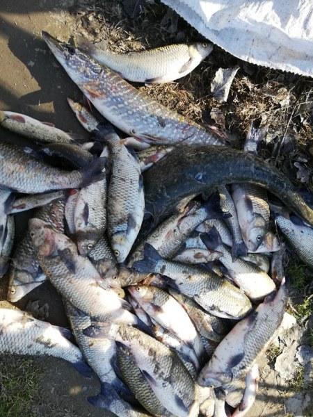 БАБХ проверява за риба от Марица