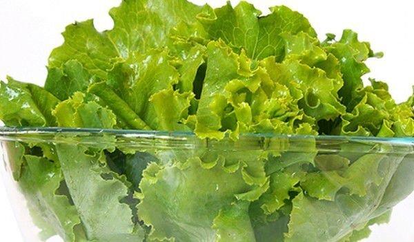 Салатите са  замърсени с бактерии